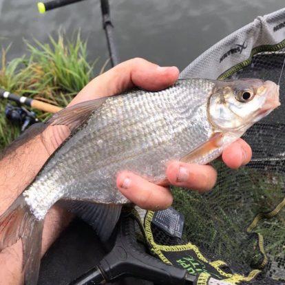 Whip fishing