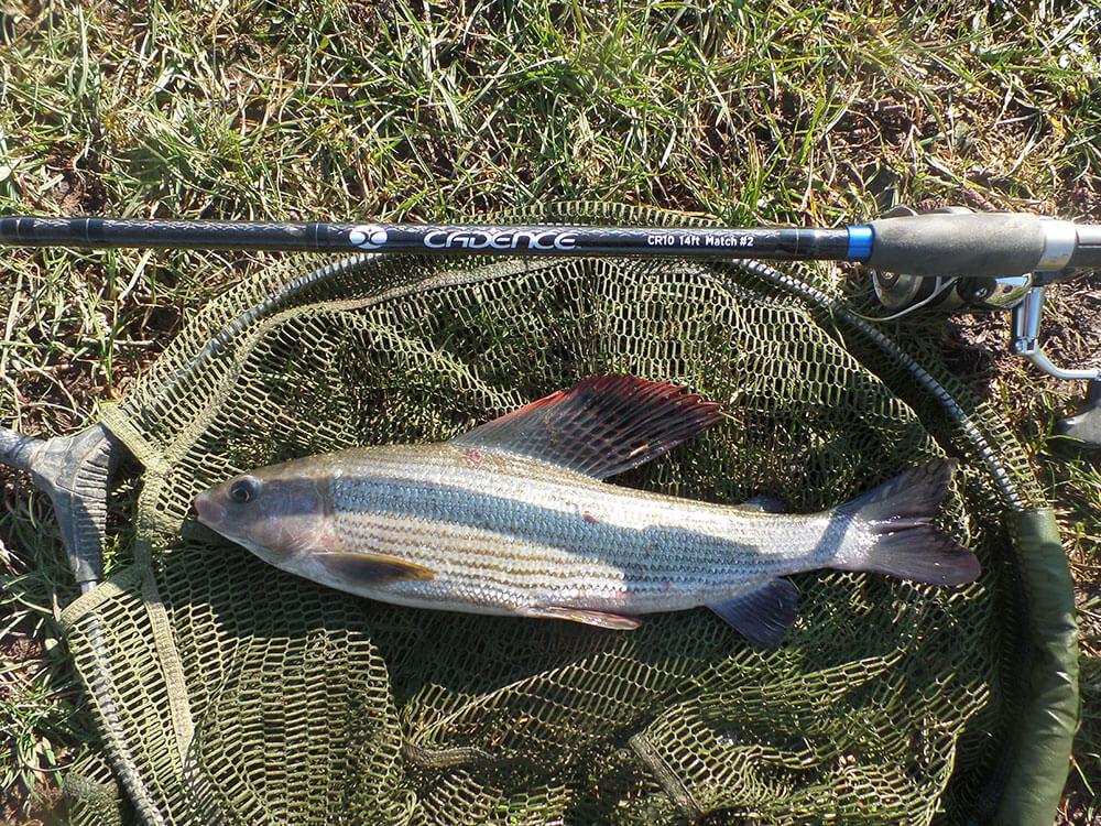 River Fishing Chalk Stream Fed Rivers