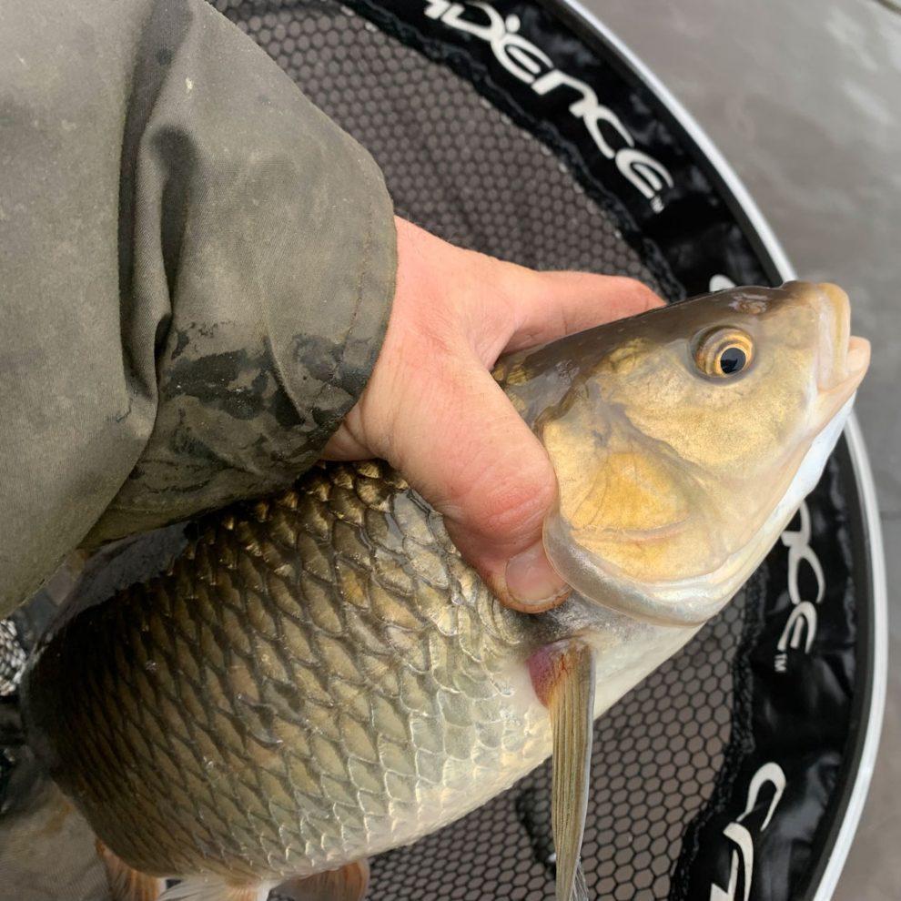 Chub Fishing on the River Ribble