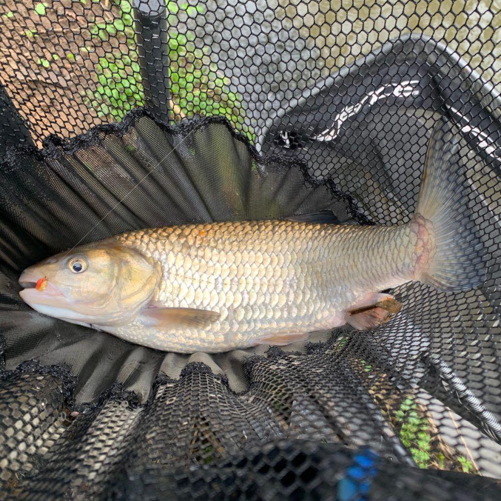 Stick Float Fishing on Rivers