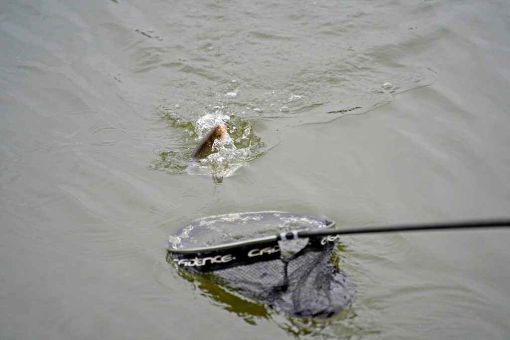 Silver fish catching