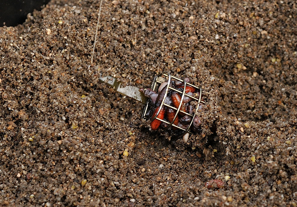 Full of natural goodness - Alan's mini Drennan cage feeder loaded with casters, chopped worm and squatts. Ideal bream feed