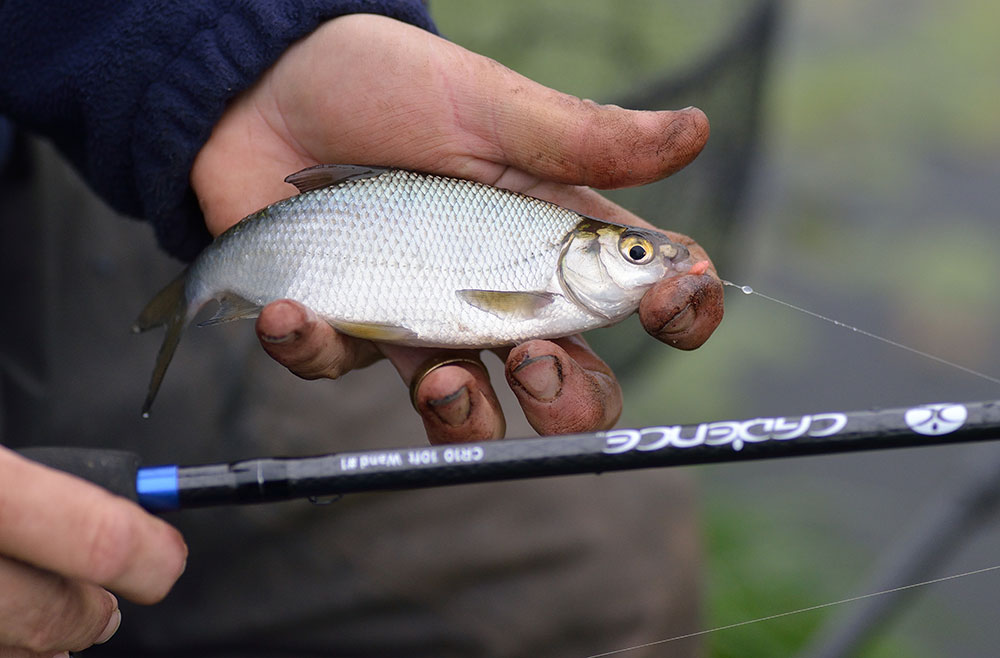 The sensitivity of the fine glass tips enabled Alan to catch small fish before the better bream moved in to feed. Smaller fish like these could prove vital on a hard winter match or simply to avoid the dreaded dry net on a pleasure session.