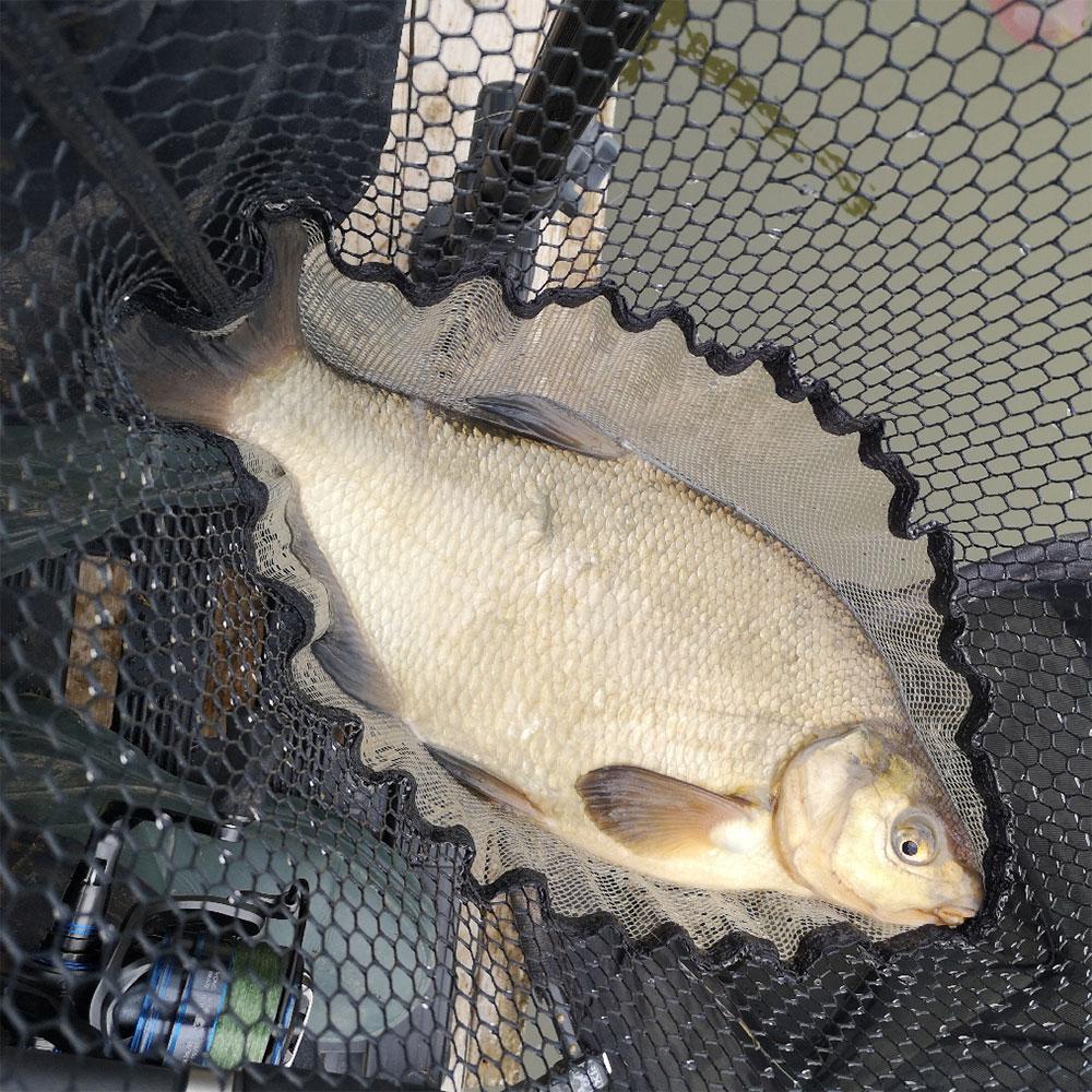 Feeder Fishing for Bream