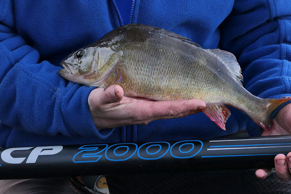 Perch Fishing on Winter Canals