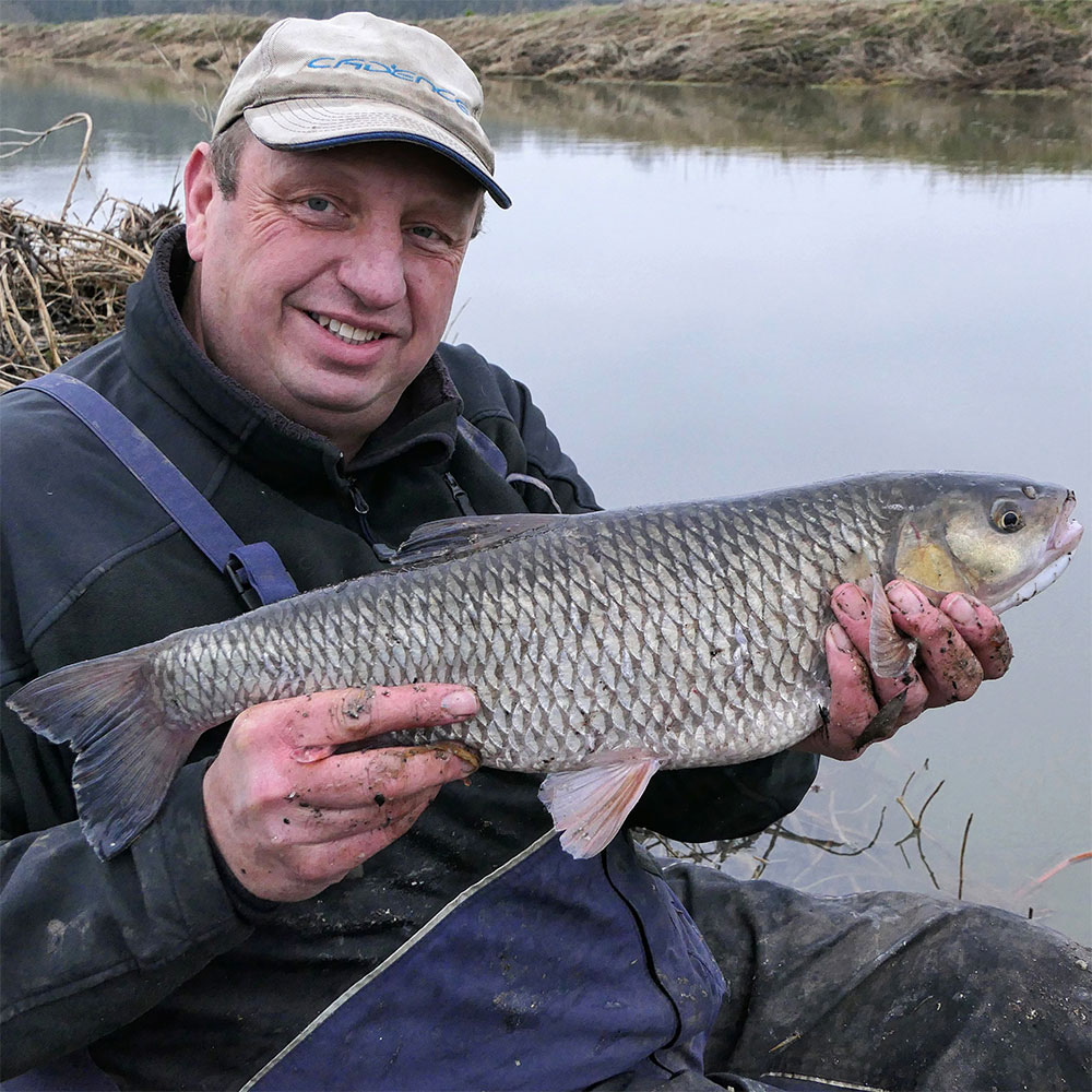 Warwickshire Avon Chub Fishing with Bread